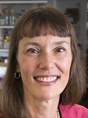 Marjolein van der Meulen