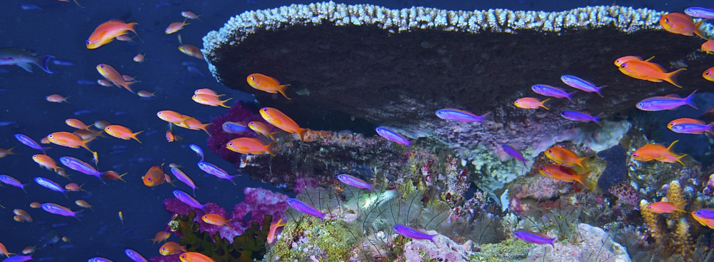 Reef Futures Themes 22